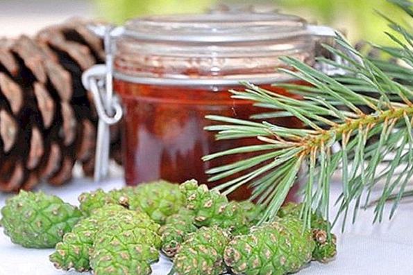 Pušų medus